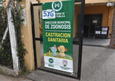 Castraciones Rio Alegre (1)