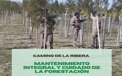 PLAN DE FORESTACIÓN EN CAMINO DE LA RIBERA